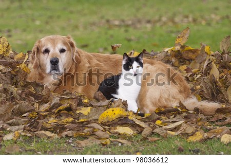 Cat and dog lying in the autumn leaves. - stock photo
