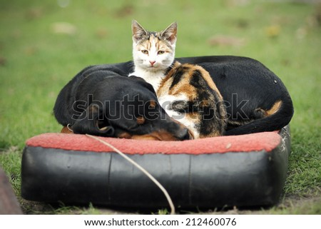 Cat and dog lying together - stock photo