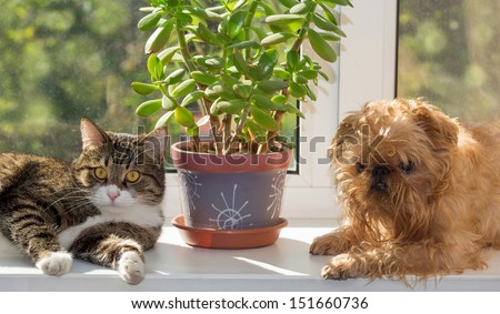 Cat and dog on the window bask in the sunshine - stock photo