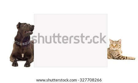 Cat and dog peeking from behind banner isolated on white background - stock photo