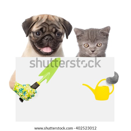 Cat and Dog peeking from behind empty board and looking at camera. isolated on white. - stock photo