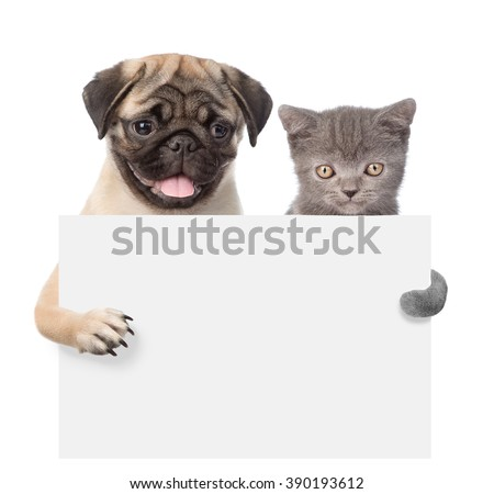 Cat and Dog peeking from behind empty board and looking at camera. isolated on white background - stock photo