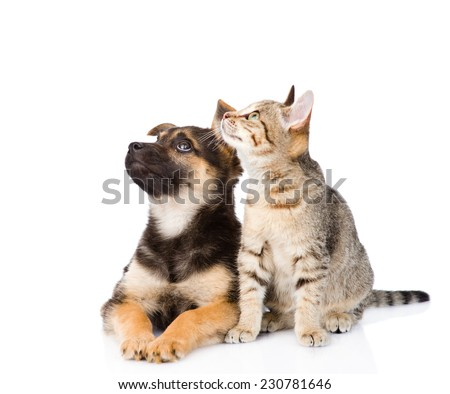 cat and dog sitting in front and looking up. isolated on white background