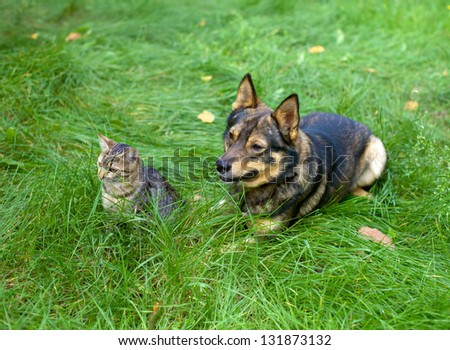 Cat and dog sitting together on the grass - stock photo