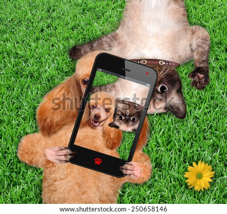Cat and dog taking a selfie. - stock photo