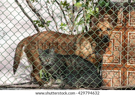 Cat and dog together behind the fence - stock photo