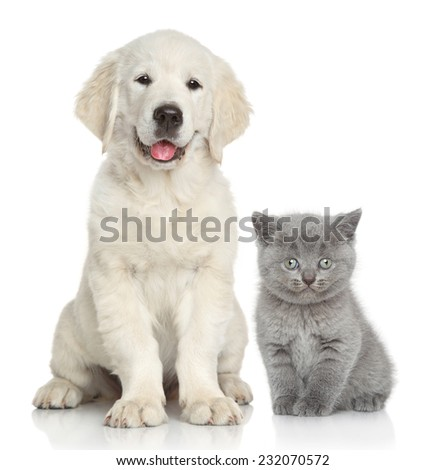 Cat and dog together in front of white background - stock photo