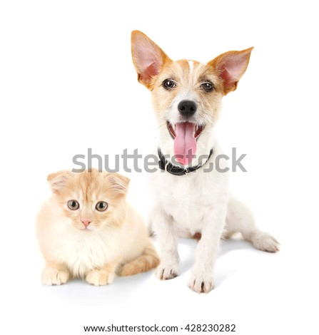 Cat and dog together, isolated on white - stock photo