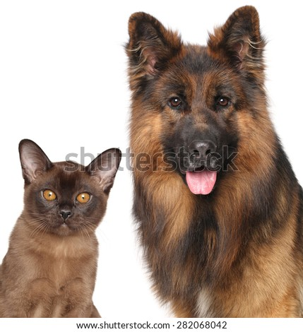 Cat and Dog together isolated on white background - stock photo