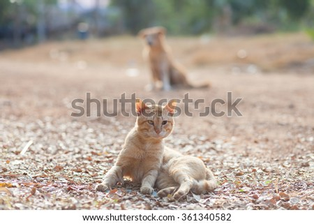 cat and dog together lying on the floor. - stock photo