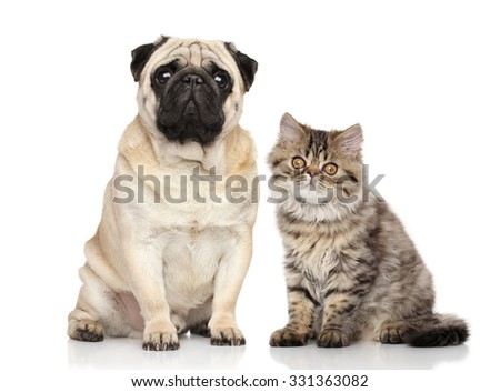 Cat and Dog together on white background - stock photo