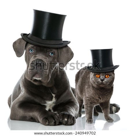 Cat and dog with cylinder hats - stock photo