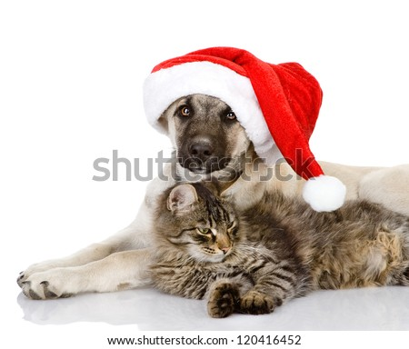 Cat and Dog with Santa Claus hat. isolated on white background - stock photo