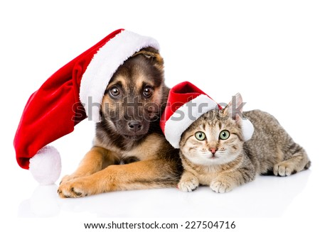 Cat and Dog with Santa Claus hat. isolated on white background