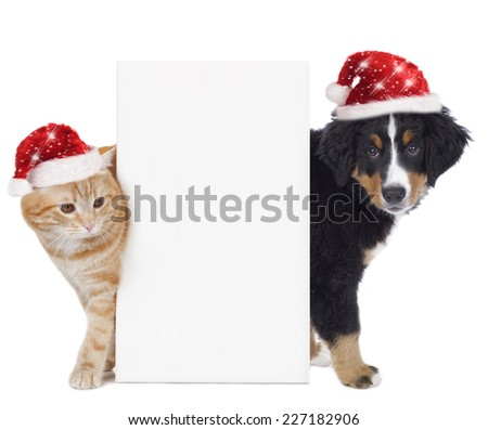 Cat and dog with santa hat isolated on white - stock photo