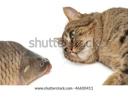 cat and fish isolated on a white - stock photo