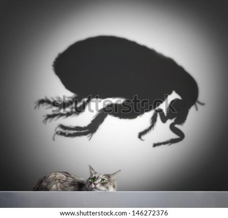 cat and flea shadow - stock photo