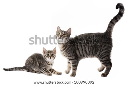 cat and kitten - stock photo