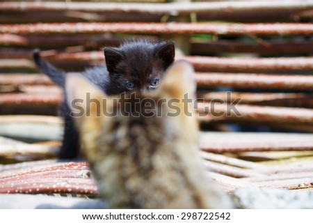 Cat and kitten on green  meadow. - stock photo