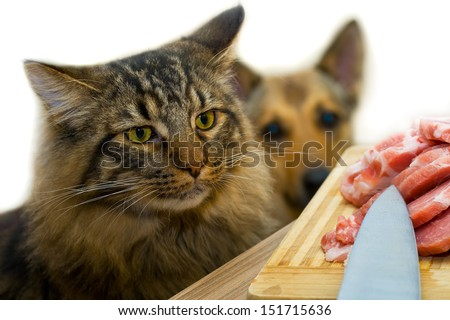 Cat and meat on the table - stock photo