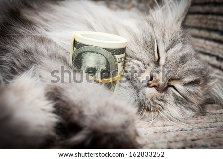 cat and  money on sofa  - stock photo