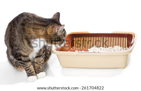 Cat and plastic toilet with filler, isolated on white - stock photo