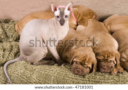Cat and puppies resting together on bed - stock photo