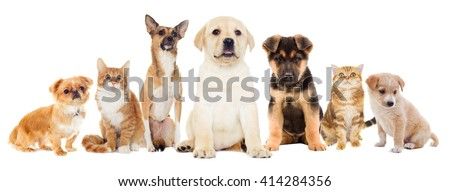 Cat and puppy on a white background isolated