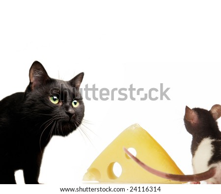 Cat and rat on a white background - stock photo