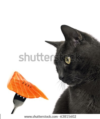 Cat and salmon - stock photo