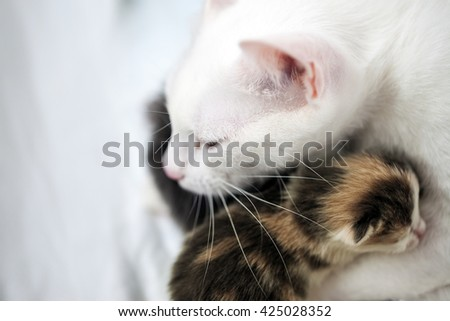 Cat and small kitten. Portrait of a big cat. Lovely, loving relationship, care and love. - stock photo