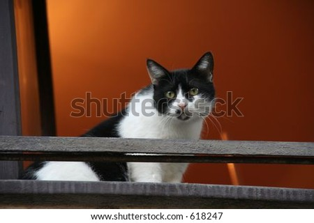 cat at a window