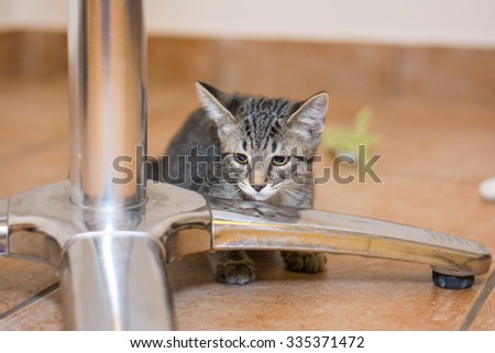 Cat at animal shelter for adoption - stock photo