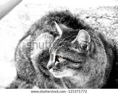 cat at the stone stair , black and white - stock photo