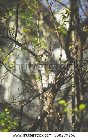 Cat at the tree - stock photo