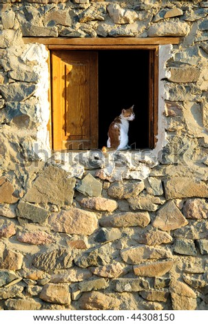 Cat at wood window in stone house - stock photo