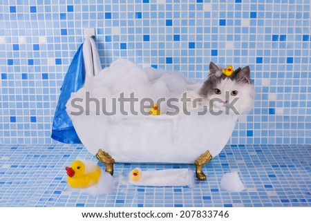 cat bathes in a bath with foam and duck - stock photo