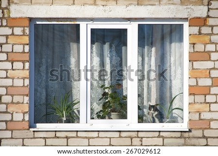 cat behind a window - stock photo