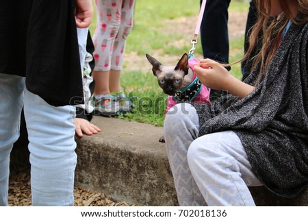 Cat being pet in a park