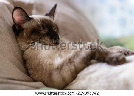 Cat Beni Sleep - stock photo