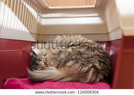 Cat carrier with striped cat under anesthetic, sleeping after surgery at veterinarian. Inside view - stock photo