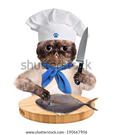 Cat chef - stock photo