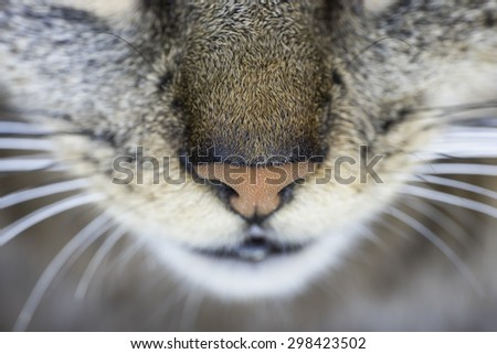 Cat close-up nose seen from from above - stock photo