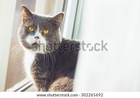 Cat close up. See the camera. - stock photo