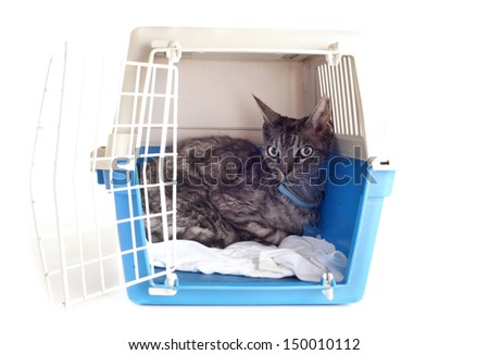 cat closed inside pet carrier isolated on white background - stock photo