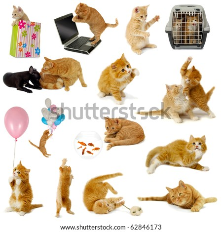 Cat collection isolated on white background. The cats are with laptop, dog, balloons, goldfish and mouse. - stock photo