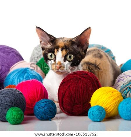 Cat Devon Rex on white background. kitten with balls of threads - stock photo