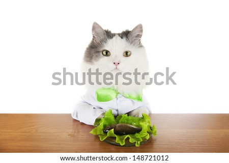 cat dines fish isolated on a white background - stock photo