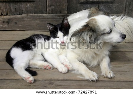 Cat dog friendship