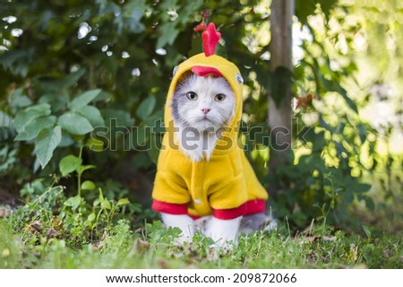 cat dressed as a chicken in the garden - stock photo